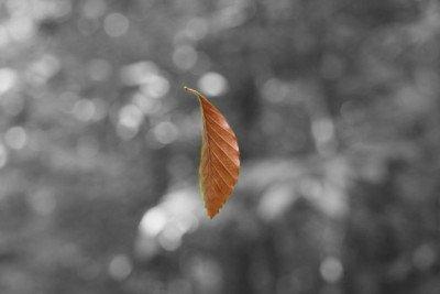 Fermo immagine di una foglia che cade da un albero
